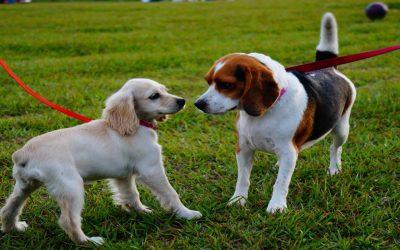 Áreas Caninas